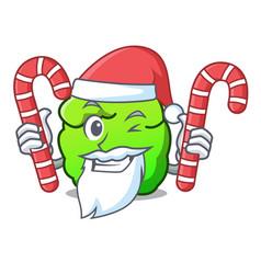 Santa with candy shrub mascot cartoon style vector