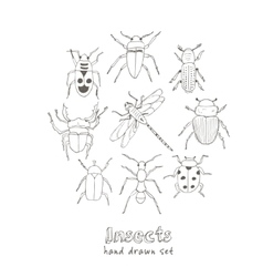 Set of doodle sketch Bugs and beetles vector image vector image