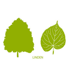 simple icon of tree and leaf vector image vector image