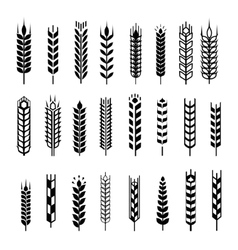 Wheat ear icon set graphic design elements black vector image