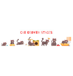 Cat growth stages composition vector