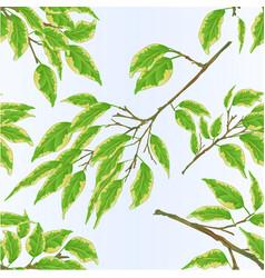 seamless texture tropical plant ficus benjamina vector image