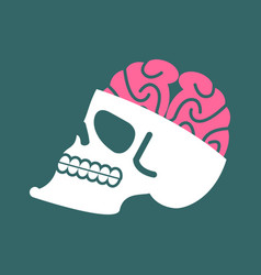Skull with brains isolated head of human skeleton vector