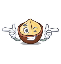 wink macadamia character cartoon style vector image