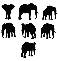 elephant collection silhouette vector image vector image