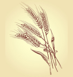 hand drawn ears of wheat with grains bakery vector image