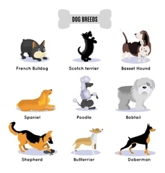 Dogs Breed Colored Icon Set vector image vector image