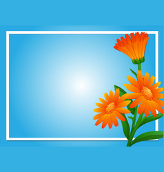 border template with orange calendula vector image
