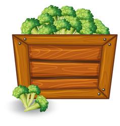 Broccoli on wooden banner vector