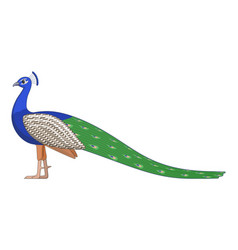 Indian peafowl bird on a white background vector