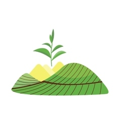 Nature tea plant field vector