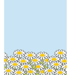 Chamomile landscape Flowers and blue sky White vector