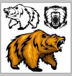color of bear grizzly vector image