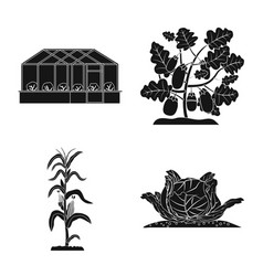 Design of greenhouse and plant icon vector