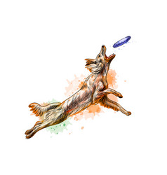 Dog catching flying disk from a splash of vector