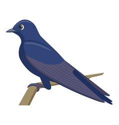 Purple martin bird on a white background vector