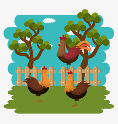 roosters in the farm scene vector image