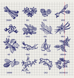 Spices and herbs sketch collection vector