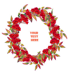 festive wreath made of branches of mountain ash vector image
