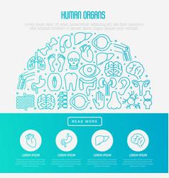 human internal organs concept in half circle vector image