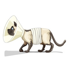 Little cat with collar and bandage vector