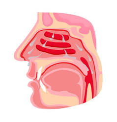 Nasopharynx iconcartoon icon vector