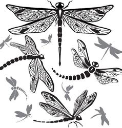 Set decorative dragonflies vector