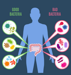 intestinal flora gut health concept with vector image