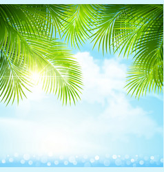 Palm leaves with bright sunlight vector image vector image