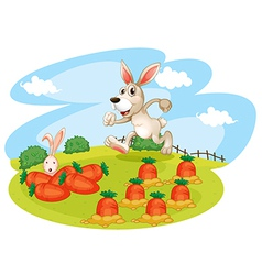 A bunny running along the garden with carrots vector image