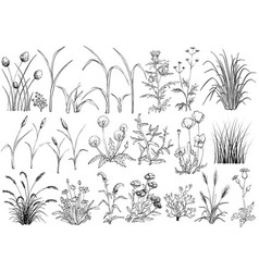 field flowers and grass butterfly hand drawn vector image