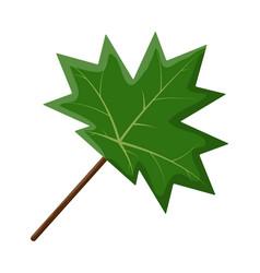 maple leaf symbol icon design vector image