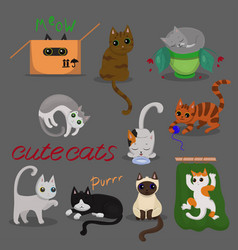 set different cats in different poses with on vector image