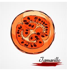 tamarillo part vector image