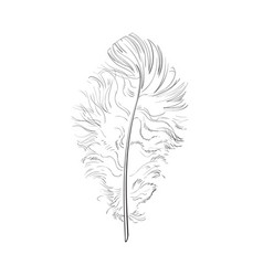 hand drawn tender fluffy black and white bird vector image