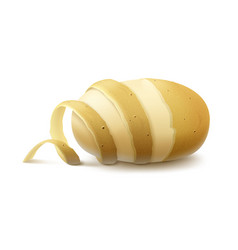 Raw half peeled potato with twisted peel vector