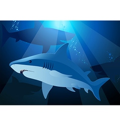 Shark swimming under the sea with sunlight vector image vector image