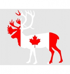 Canadian caribou vector image