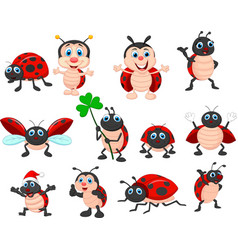 cartoon ladybug collection set vector image