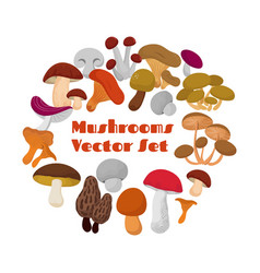 delicacies fresh edible mushrooms set vector image