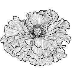 Poppy in line art style vector