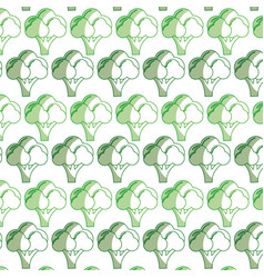 Broccoli organic healthy vegetable background vector