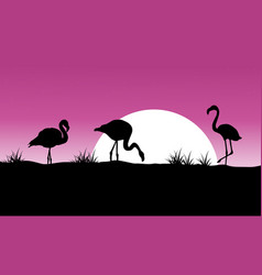 Flamingo at sunset scenery silhouettes vector