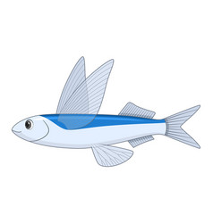 flying fish on a white background vector image