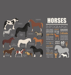 Horse breeding infographic template farm animal vector