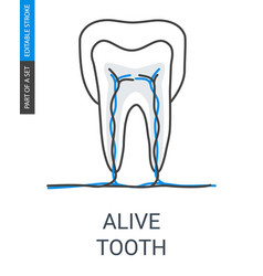 Living tooth with vessels and veins icon vector