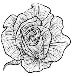 Roses in line art style vector