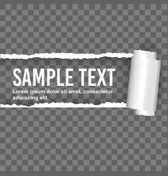 Seamless ripped paper and transparent background vector