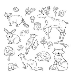 Sketch forest animals woodland cute baby animal vector