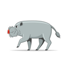 bornean bearded pig animal standing on a white vector image